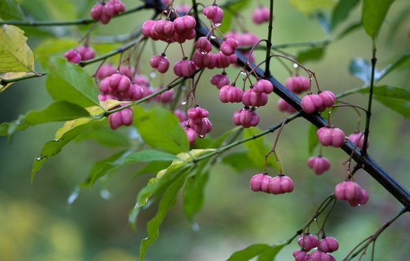 Картинка листья, капли, макро, дождь, ветка, цветки