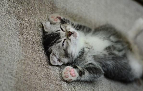 Картинка лапки, мордочка, спит, котёнок