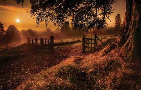 Картинка небо, трава, листья, солнце, лучи, деревья, ветки, природа, туман, блики, дерево, земля, забор, ствол