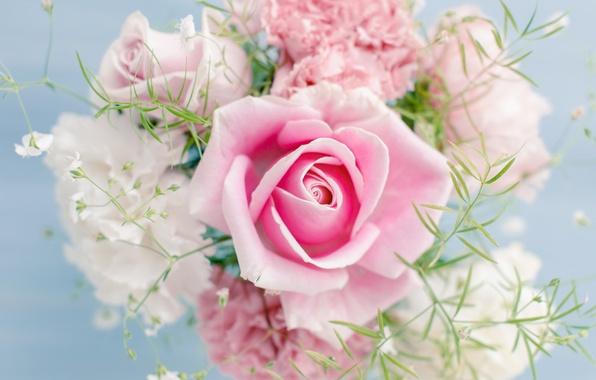 Картинка цветы, красивая, flowers, beautiful, Розовая роза, Pink rose