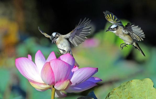 Картинка цветок, макро, птицы, крылья, лепестки, лотос