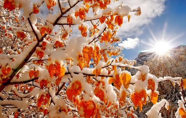Картинка зима, небо, солнце, облака, свет, снег, деревья, горы, ветки, природа, colors, light, sky, trees, nature, …