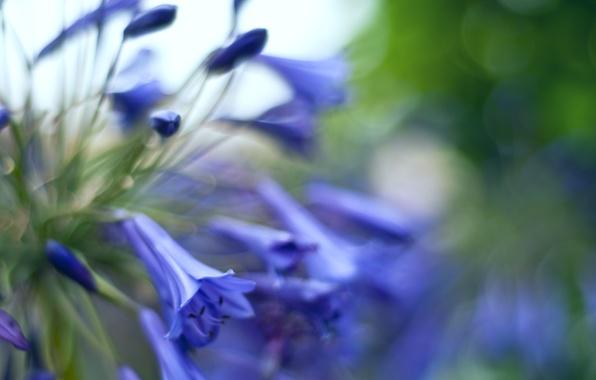 Картинка макро, блики, размытость, Колокольчики, цветочки, бутоны, синие