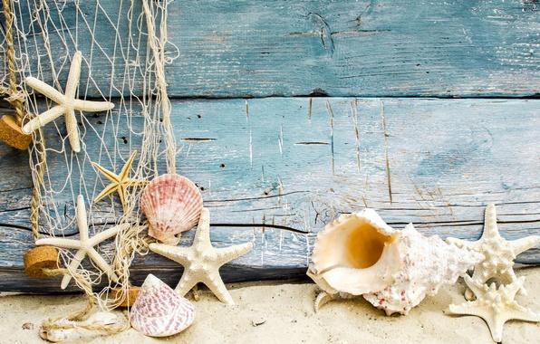 Картинка песок, пляж, ракушки, beach, wood, sand, marine, seashells, starfishes