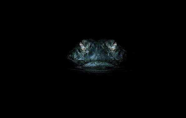 Картинка глаза, ночь, крокодил, охота