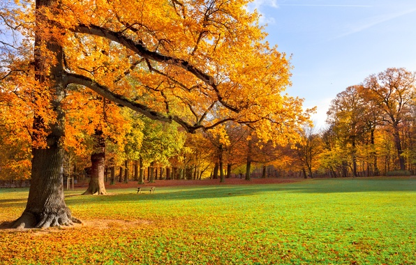 Картинка осень, трава, листья, деревья, пейзаж, скамейка, природа, парк, желтые, лавка, скамья
