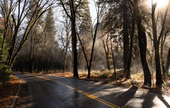 Дорога лес осень природа пейзаж