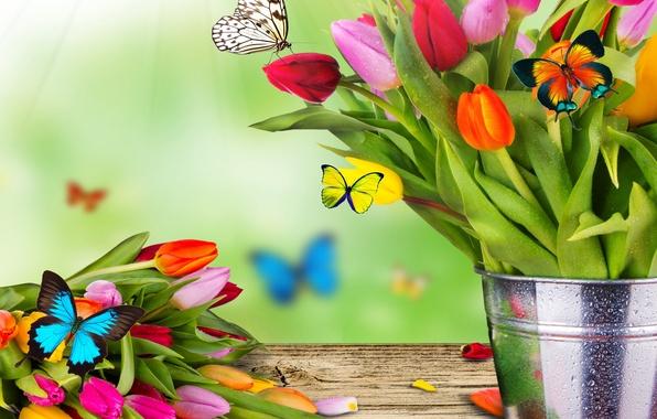 Картинка цветы, коллаж, бабочка, букет, весна, ведро, тюльпаны, мотылек
