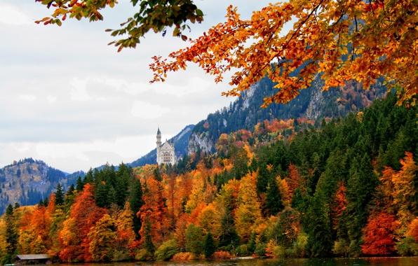 Картинка осень, лес, река, замок, Германия, Бавария, nature, Germany, Bavaria, деревья., Schwangau
