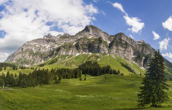 Картинка лес, небо, облака, деревья, горы, вершины, луга