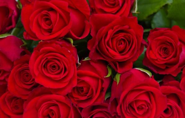 Картинка листья, цветы, розы, букет, красные, бутоны