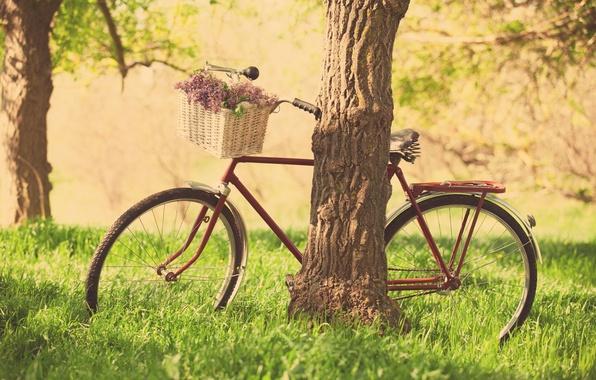 Картинка зелень, трава, листья, деревья, цветы, природа, велосипед, фон, дерево, обои, корзина, настроения, колесо, фиолетовые, цветочки, …