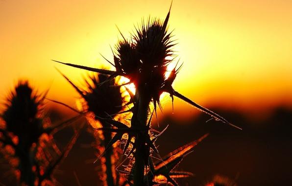 Картинка трава, солнце, колючки, шипы