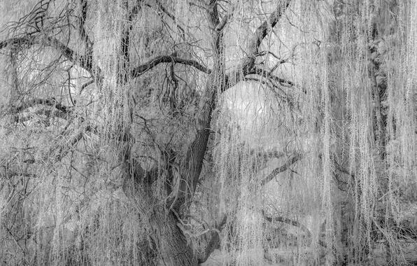 Картинка ветки, дерево, ветви