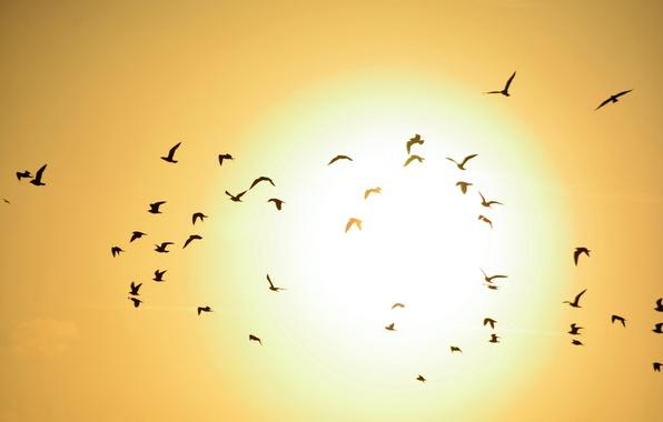 Картинка небо, солнце, закат, птицы, стая