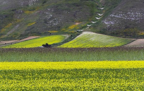 Картинка поле, цветы, горы, склон, луг