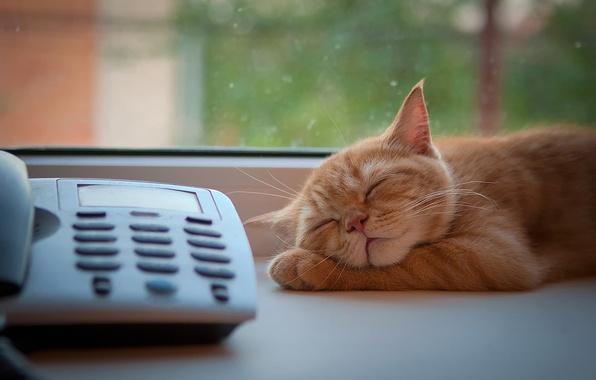Картинка кот, окно, рыжий, спит