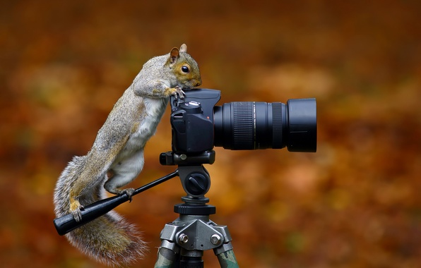 Картинки фотокамера - e4