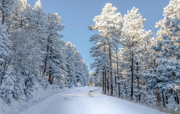 Картинка зима, дорога, свет, снег, деревья, природа, Colorado