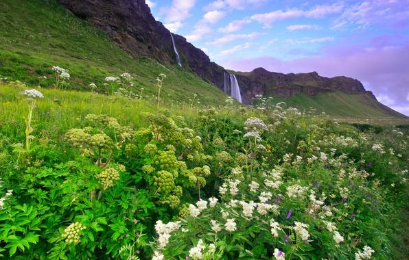 Картинка зелень, небо, трава, облака, цветы, горы, холмы, голубое, водопад, утро, Исландия, сиреневое
