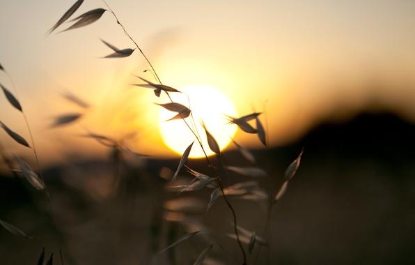 Картинка небо, солнце, закат, природа, холмы, вечер, травы, травинки, краски., былинки