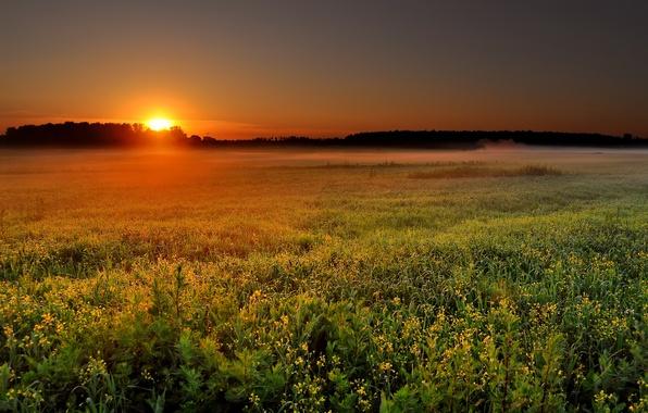 Картинка поле, солнце, пейзаж, природа, туман, восход, рассвет, утро