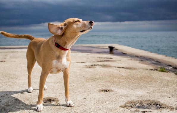 Картинка море, друг, собака