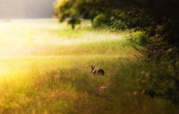 Картинка лес, свет, поляна, заяц, кролик, зайчик, заець