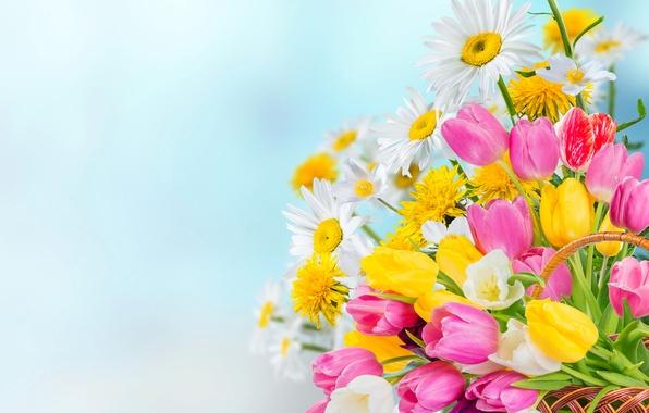 Цветы тюльпаны  описание с фото лечебные свойства