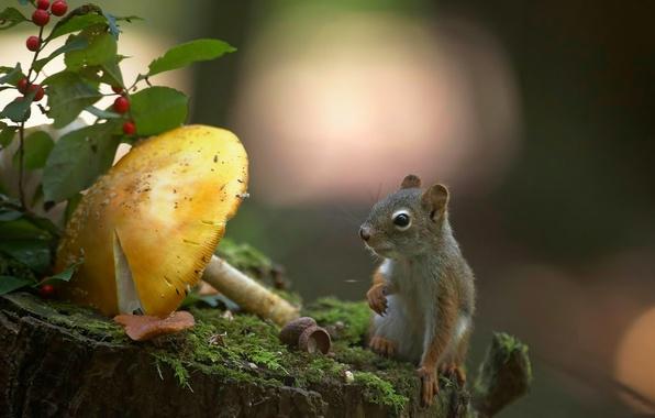 Картинка природа, гриб, мох, пень, белка