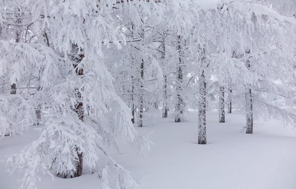 Обои лес зима деревья снег картинки