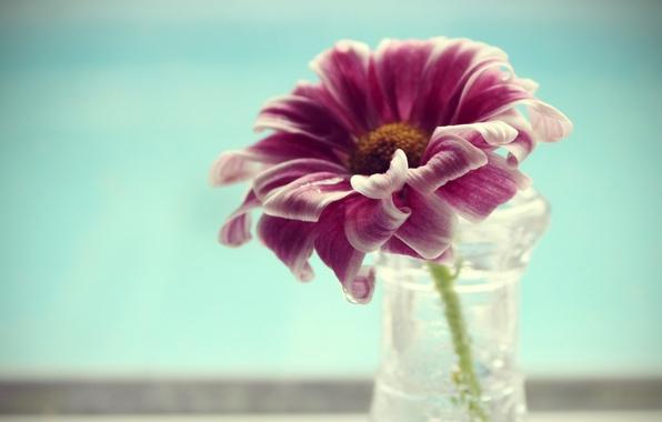 Картинка цветок, вода, макро, лепестки, ваза, flower, water, macro, 2560x1600, vase, petals