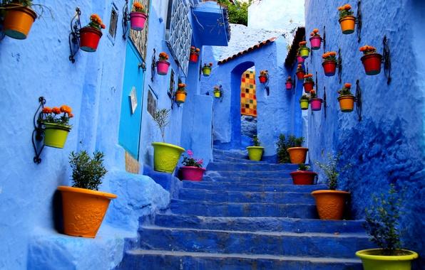 Картинка цветы, город, улица, стены, краски, дома, ступени, горшок