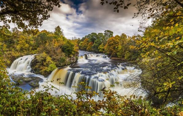 Картинка осень, лес, листья, деревья, ветки, камни, течение, водопад, Шотландия, речка, каскад, Clyde Valley Woodlands