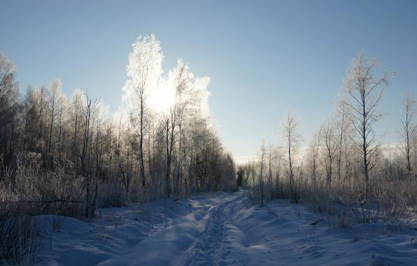 Картинка иней, дорога, лес, небо, солнце, свет, снег, деревья, Зима, тропа, тень, мороз, прогулка, кусты, хорошая …