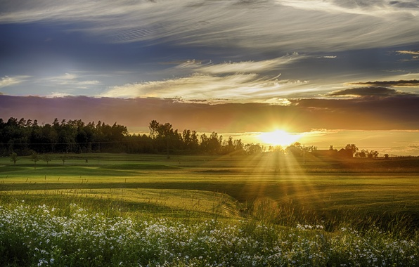 Картинка поле, небо, трава, деревья, закат, цветы, ромашки, лучи солнца