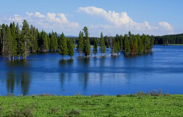 Картинка лес, небо, деревья, озеро, река, весна, разлив, половодье