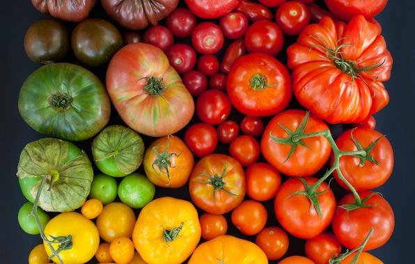 Картинка разноцветные, помидоры, томаты
