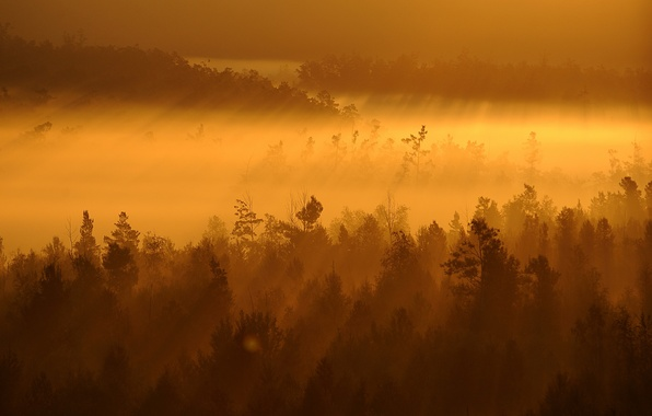 Картинка деревья, пейзаж, закат, туман