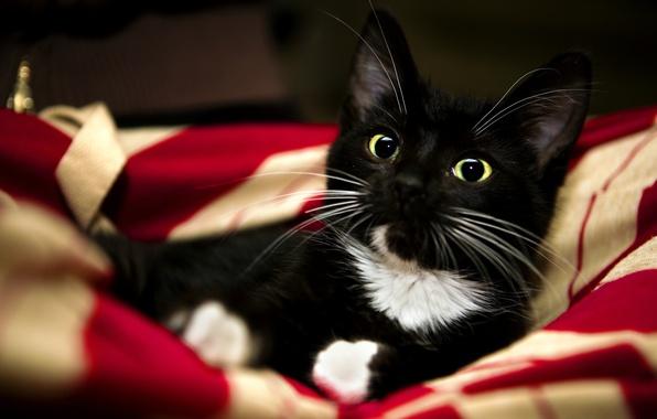 Картинка кошка, белый, красный, котенок, животное, черный, лапы, сладко, одеяло, red, white, black, kitten, cat, animal, …
