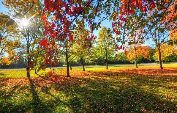 Фото парк небо деревья трава листья