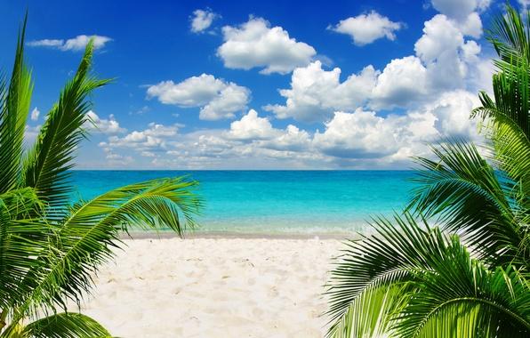 Картинка песок, море, пляж, небо, солнце, тропики, пальмы, океан, берег, summer, sunshine, beach, sky, sea, ocean, ...