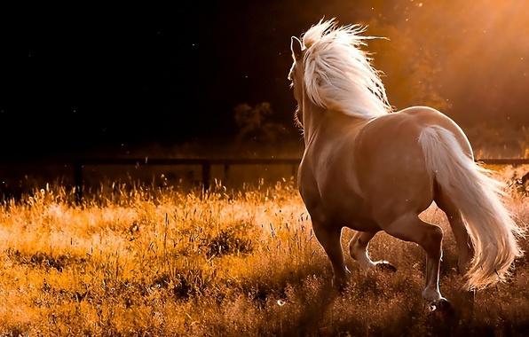 Конь резвится на природе обои фото
