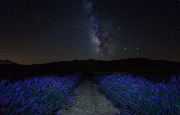 Картинка небо, звезды, цветы, горы, ночь, лаванда, плантация