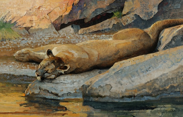 Картинка кошка, вода, ручей, камни, отдых, сон, хищник, картина, арт, лежит, пума, водопой, дикая, валуны, Bob …