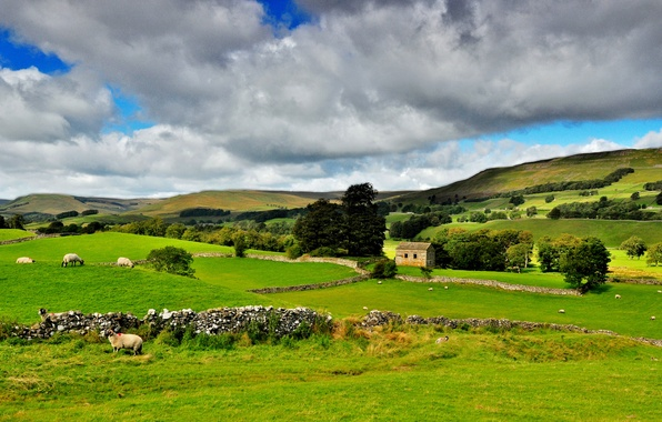 Картинка зелень, небо, деревья, пейзаж, тучи, природа, парк, национальный, Йоркшир-Дейлз, Северная Англия, Yorkshire Dales, Northern England