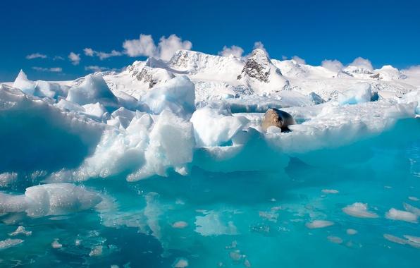 Картинка вода, снег, природа, океан, тюлень, льды, север, Антарктида