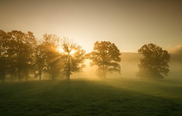 Картинка зелень, трава, листья, солнце, лучи, деревья, пейзаж, природа, фон, дерево, рассвет, widescreen, обои, красота, утро, ...