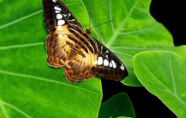 Картинка зелень, лист, Бабочка