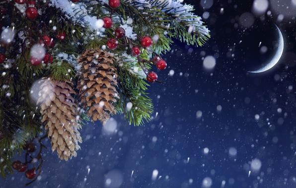 Картинка снег, месяц, ёлка, шишки